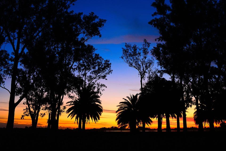 Laguna, Landscape, Sunset, Trees, Palms, Twilight