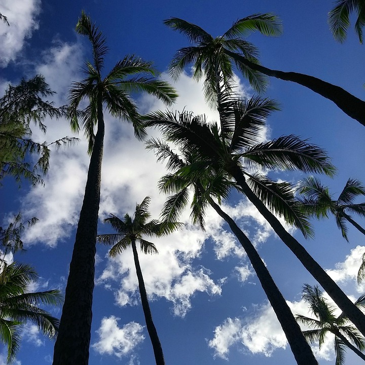 Palm Trees, Nature, Outdoors, Trees, Palms, Island