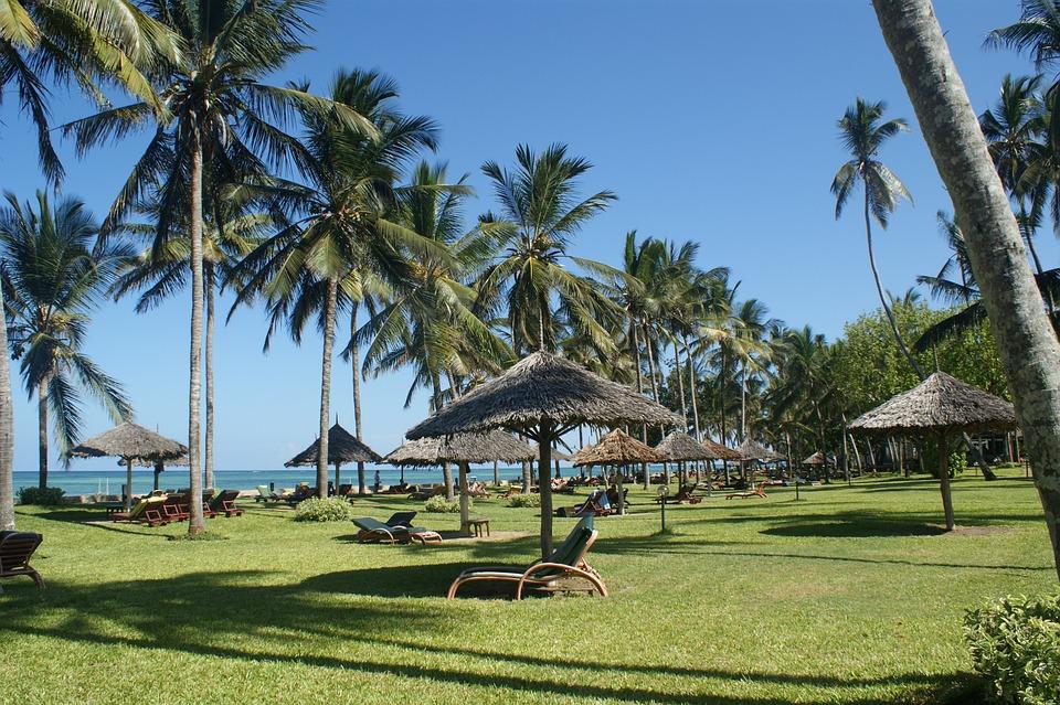Palms, Beach, Holiday, Kenya, Vacation, Paradise, Sun