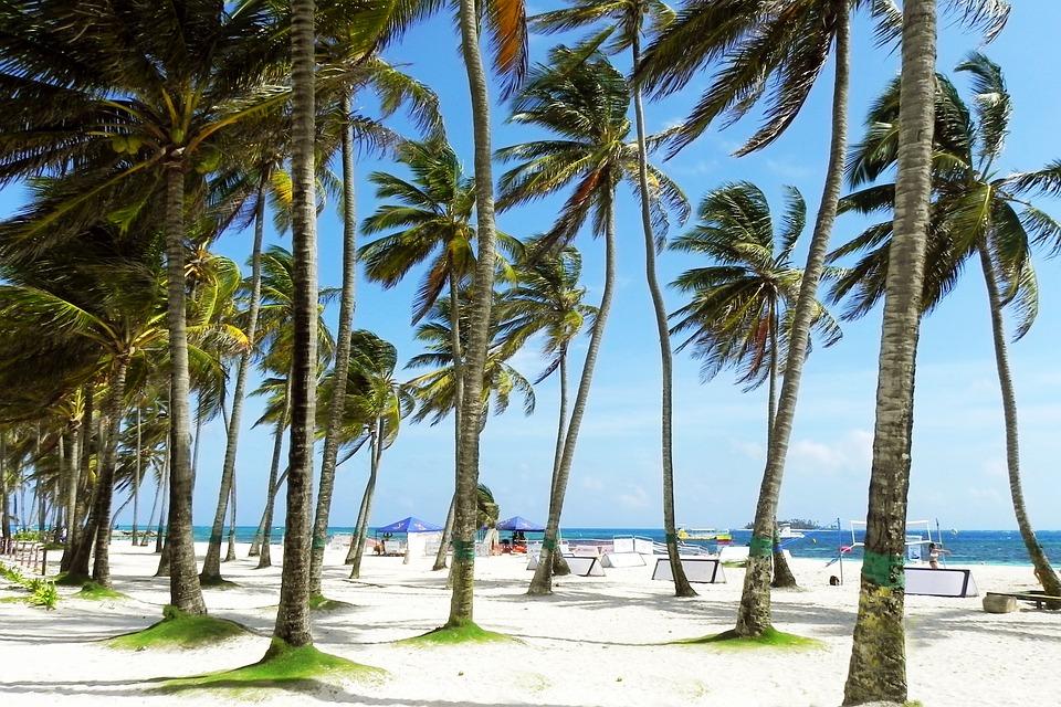 Palms, Palm Tree, Sunny, Beach, Tropical, Tropics