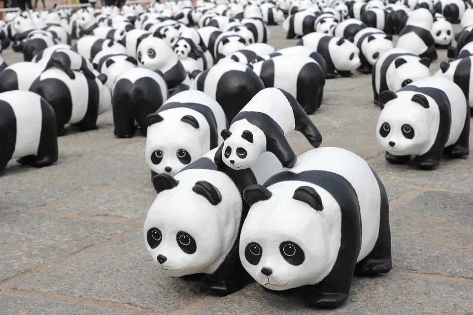 Panda, Exhibition, Show, Exhibit, Animal, Endangered