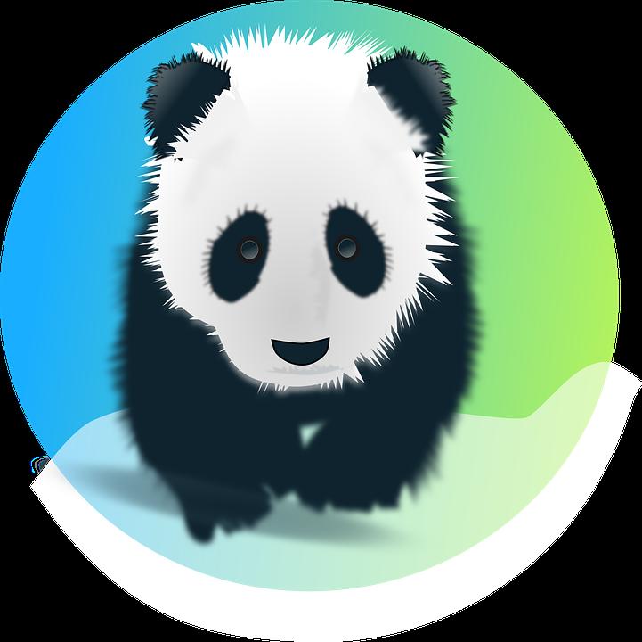 Panda, Bear, Giant, Pandas, Endangered, Mammal, Animal