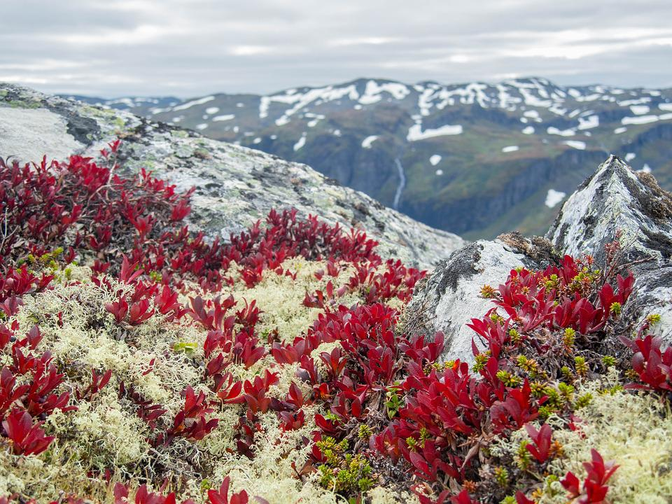 Mountain, View, Alpine, Nature, Panorama, Hiking