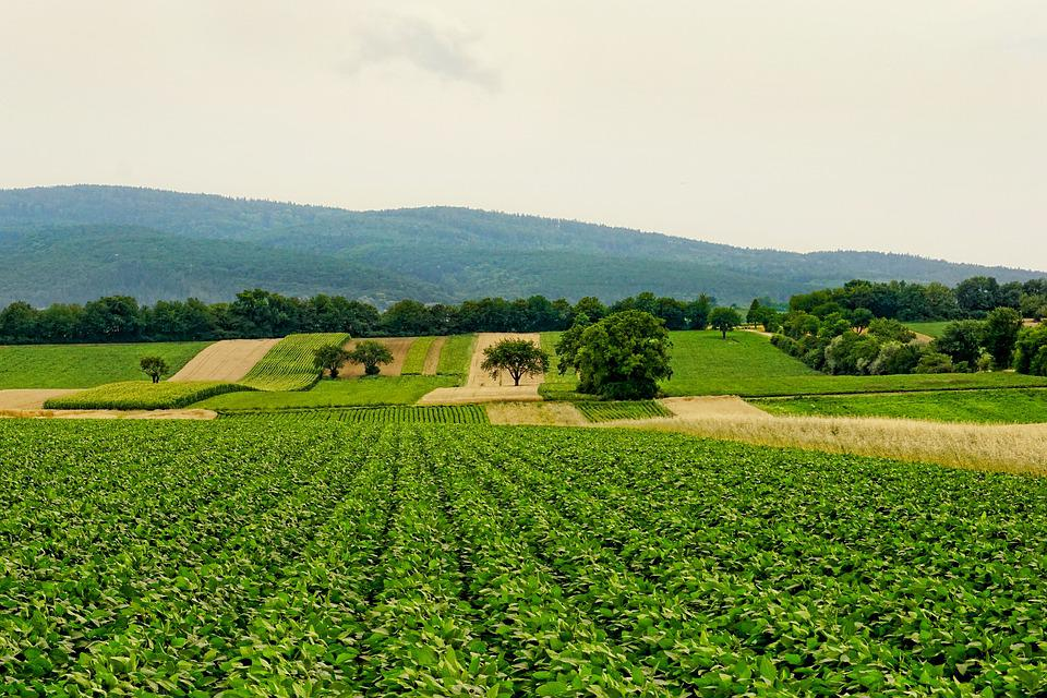 Nature, Arable, Agriculture, Landscape, Panorama, Hill