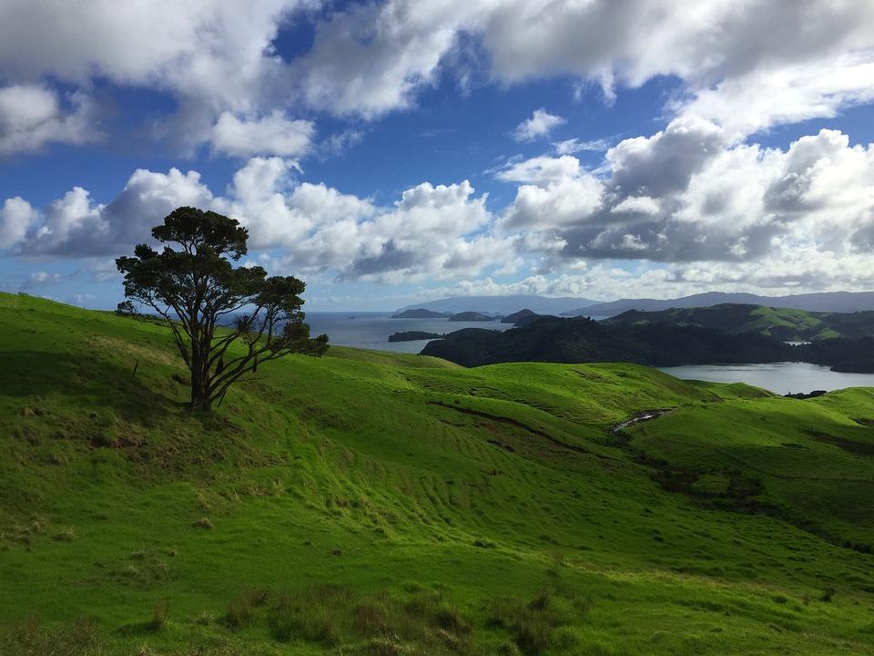 Landscape, Nature, New Zealand, Panorama, Green