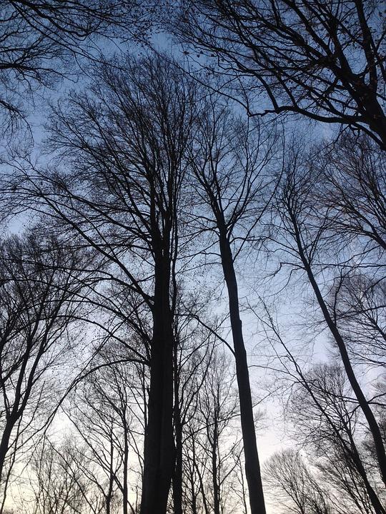 Tree, Wood, Nature, Winter, Landscape, Panoramic