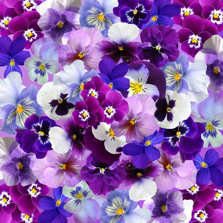 Free Photo Pansy Spring Flowers Easter Graphic Background Max Pixel