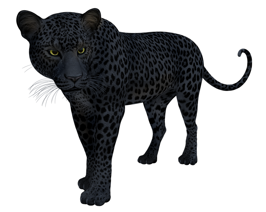 Black, Panther, Leopard, Jaguar, Cat, Big, Wildlife