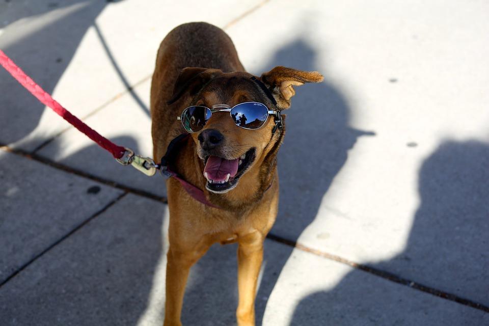 Dog, Panting, White, Pet, Animal, Canine, Funny