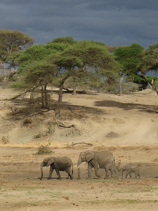 Elephants, Tanzania, Nature, Dark Air, Mama, Papa