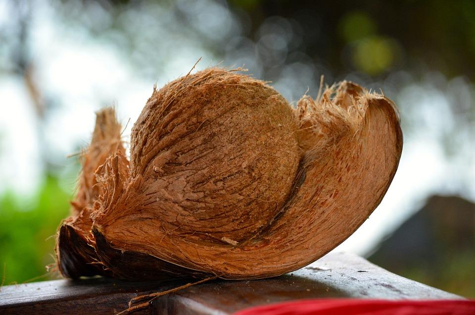 Coconut, Paradis, Thailand