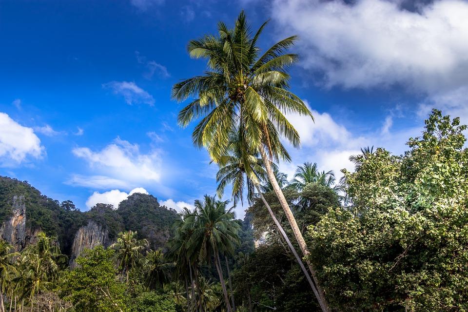 Beach, Palma, Paradise, Krabi, Thailand, The Tropical