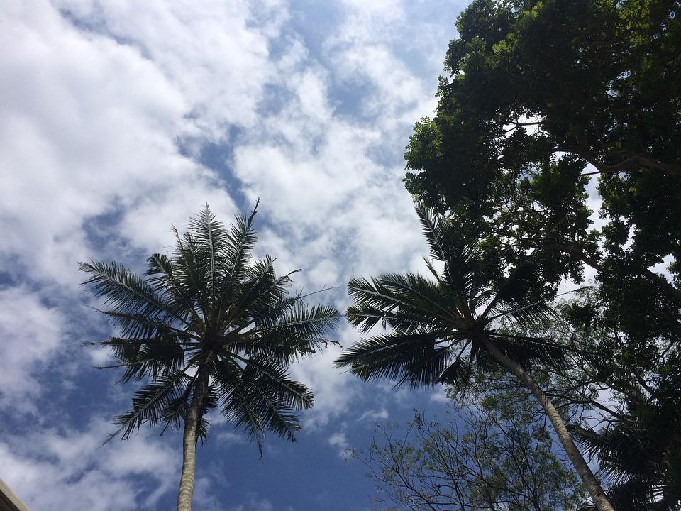 Bali, Sky, Palm Trees, Paradise, Beach, Outdoor