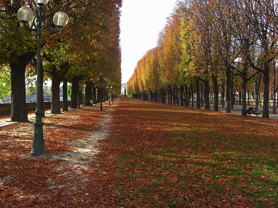 Paris, France, Trees, Autumn, Fall, Leaves, Street