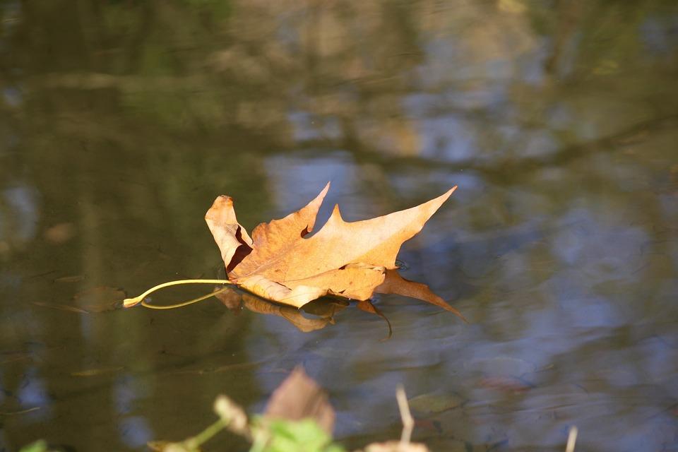 Autumn, River, Leaf, Park, Torrent, Slide, Italy