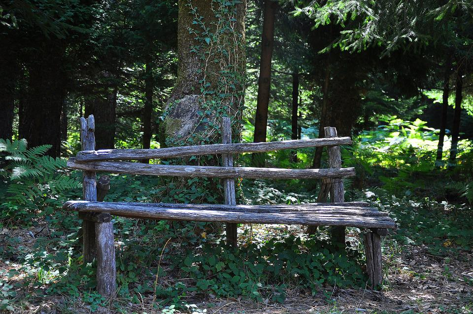 Forest, Bench, Park