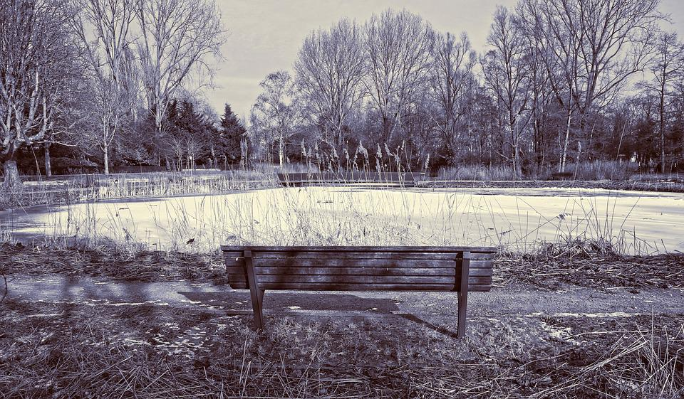Wooden Bench, Park Bench, Pond, Ice, Frozen Over