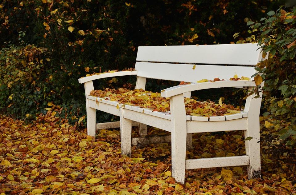 Park Bench, Autumn, Leaf Fall, Park, Fall Leaves