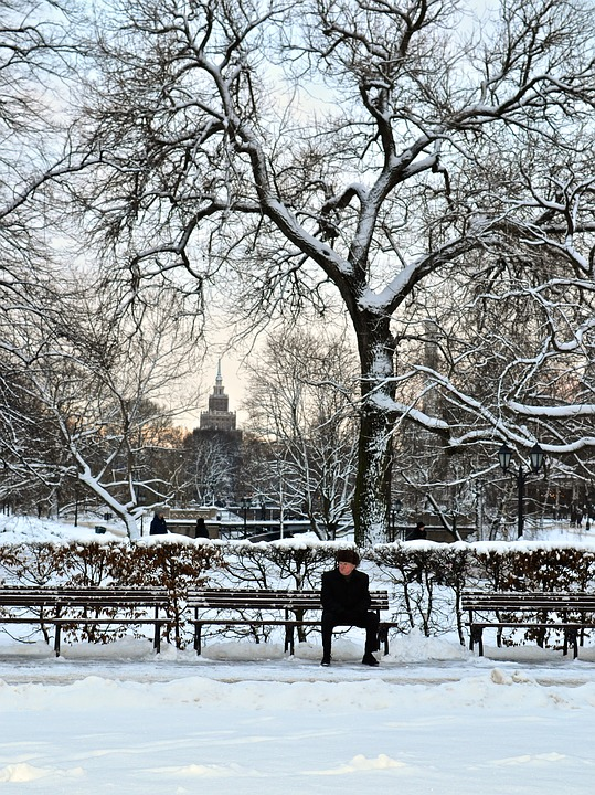Winter, Snow, Cold, Park, Park Bench, Tree, Ice