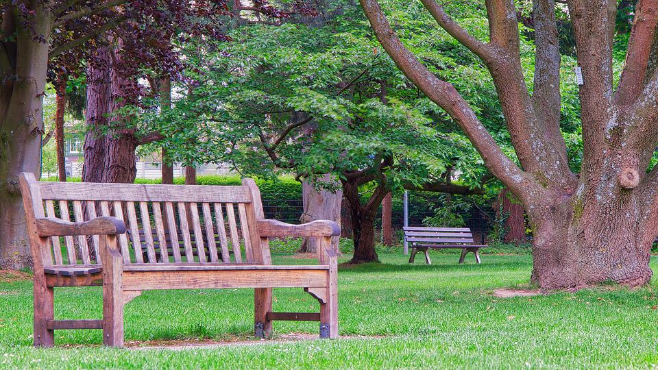 Park Bench, Bank, Wood, Tree, Garden, Seat, Rest