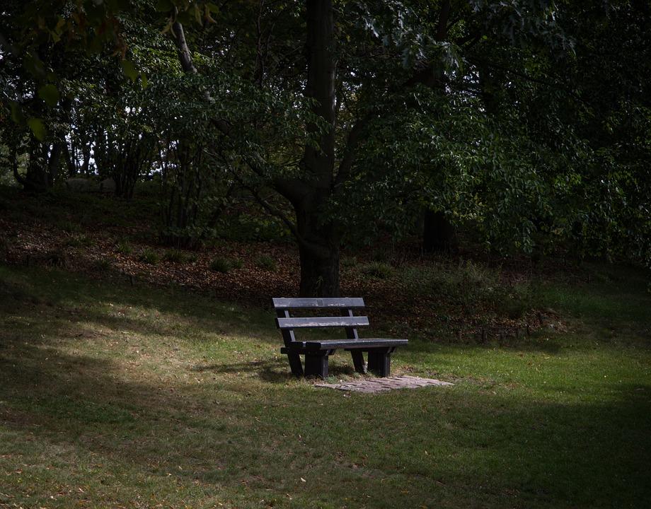 Park Bench, Sunlight, Park, Nature, Green, Trees, Light