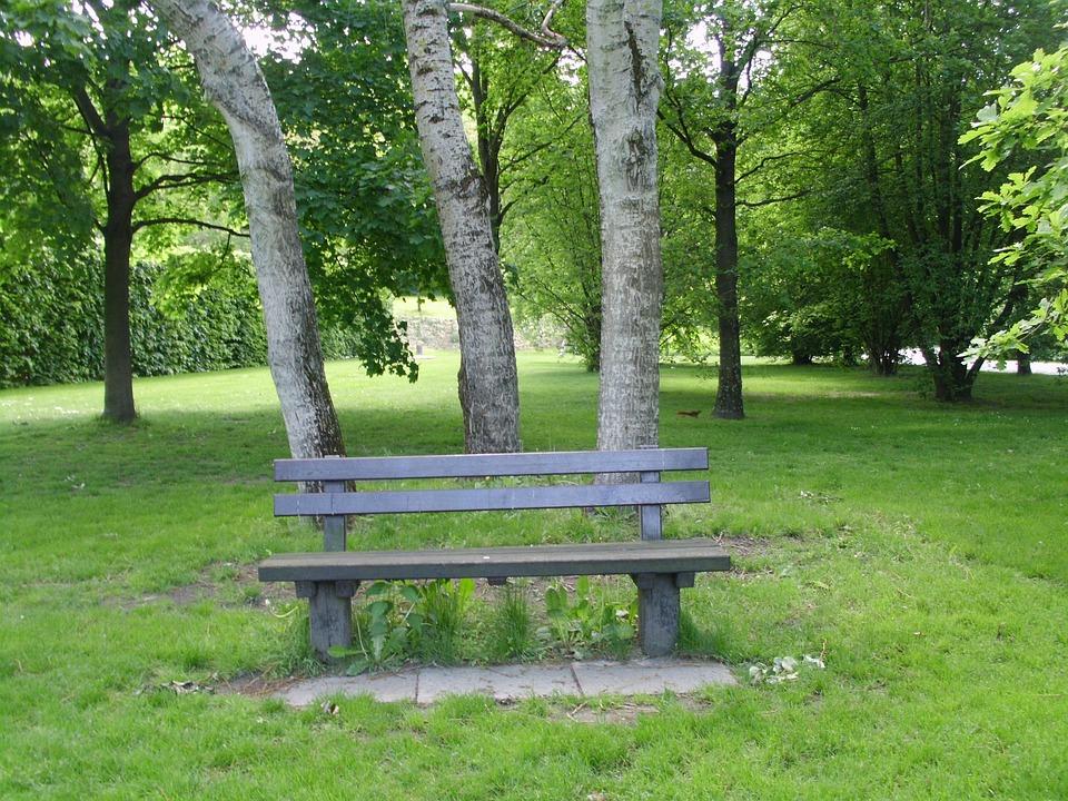 Bank, Park, Birch, Nature, Forest, Trees, Landscape