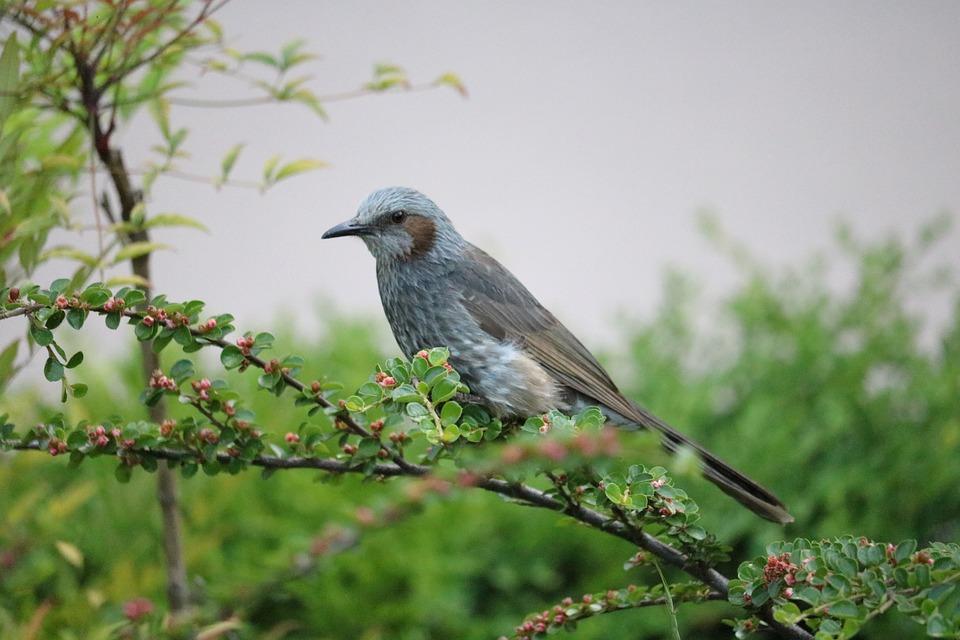 Direct Foil Copper, Birds, New, Passerine, Beak, Park