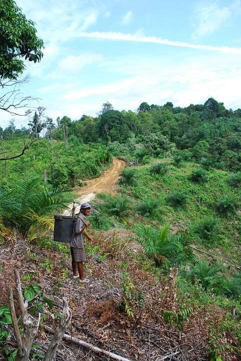Free photo Park Borneo Tropical Forest Asia Jungle Malaysia Max Pixel
