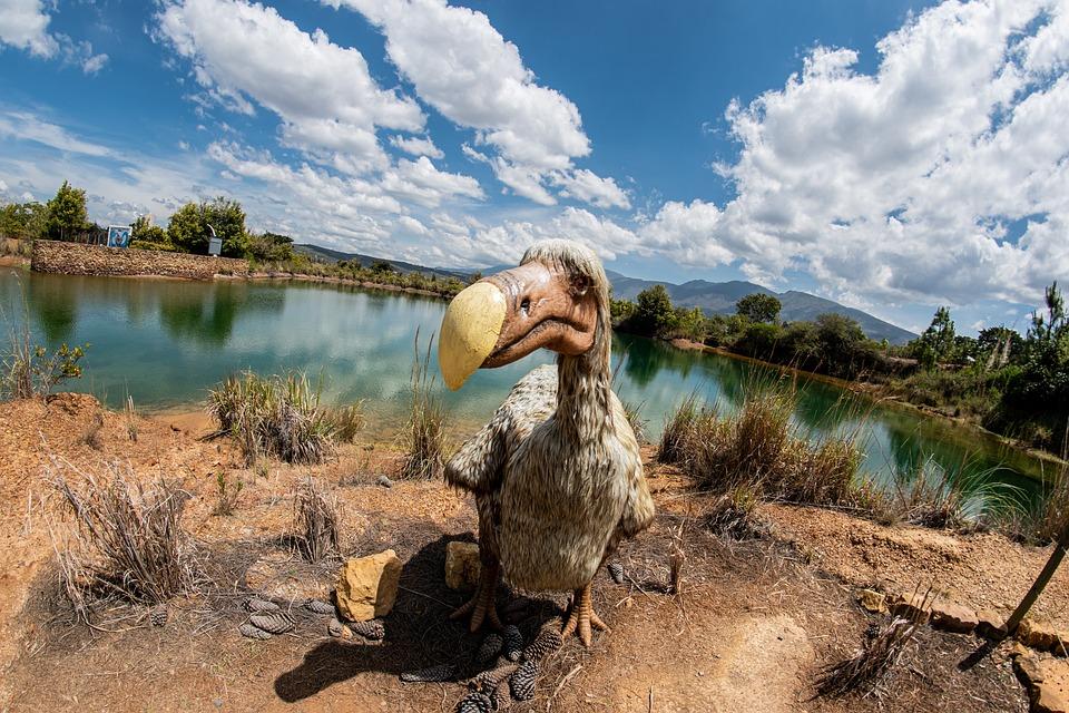 Dodo, Gondava, Park, Dinosaurs, Boyaca, Colombia