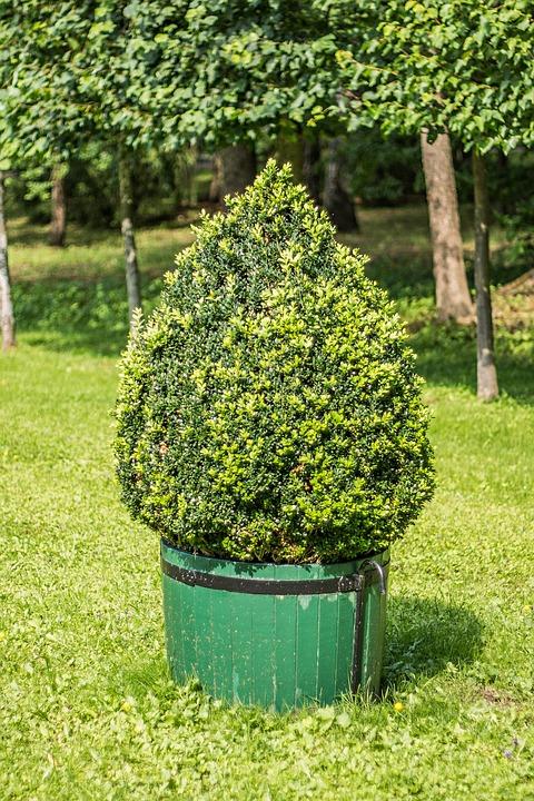 bush park plant garden tree trees summer - Bush Garden
