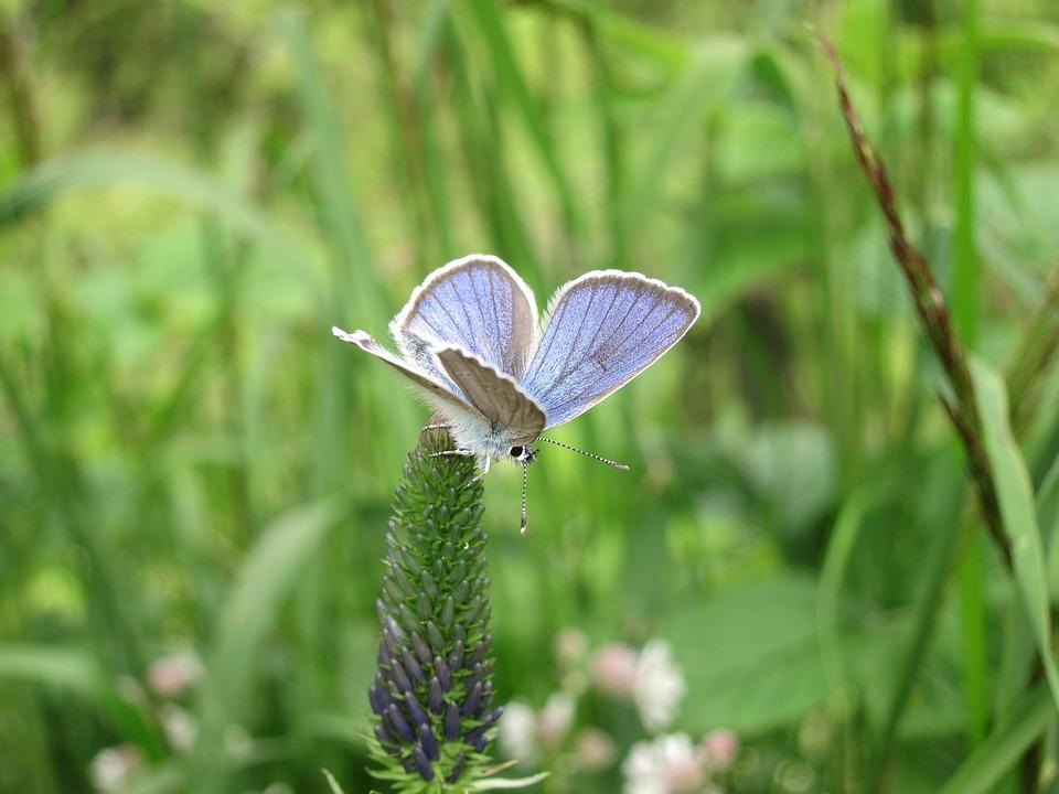 Butterfly, Blue, Meadow, Art, Forest, Park