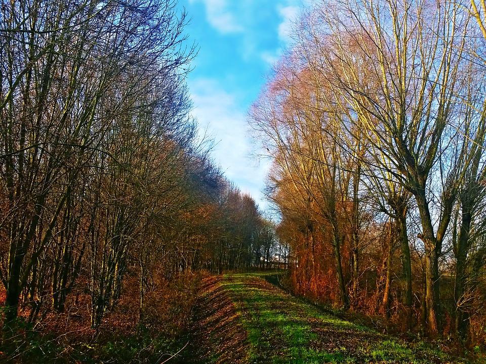 Landscape, Autumn, Nature, Tree, Colors, Foliage, Park