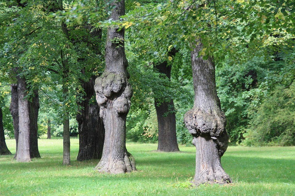 Dresden, Park, Trees, Growth