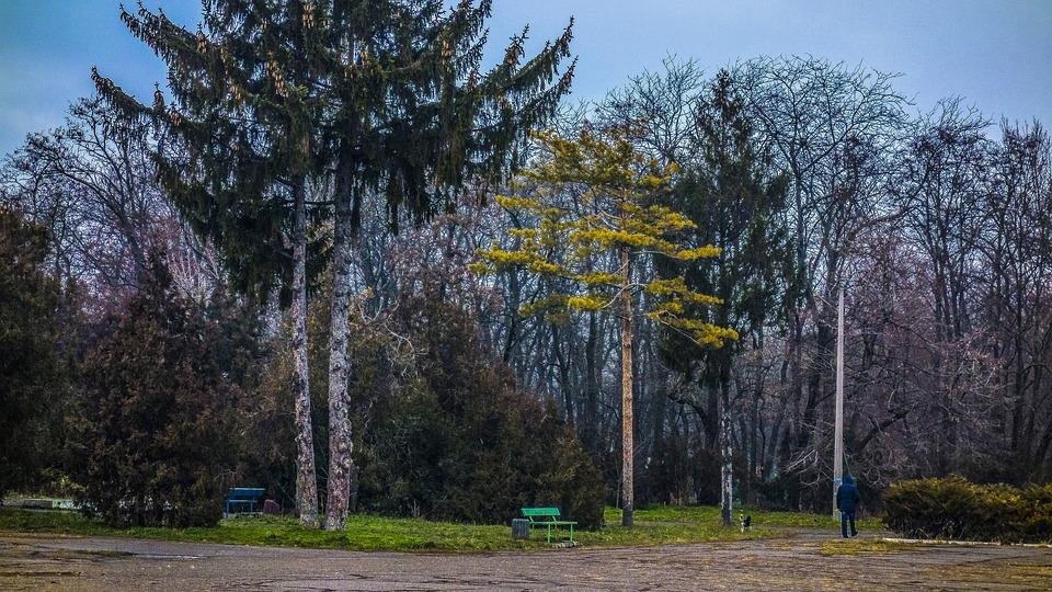 Park, Duke, Odessa, Trees