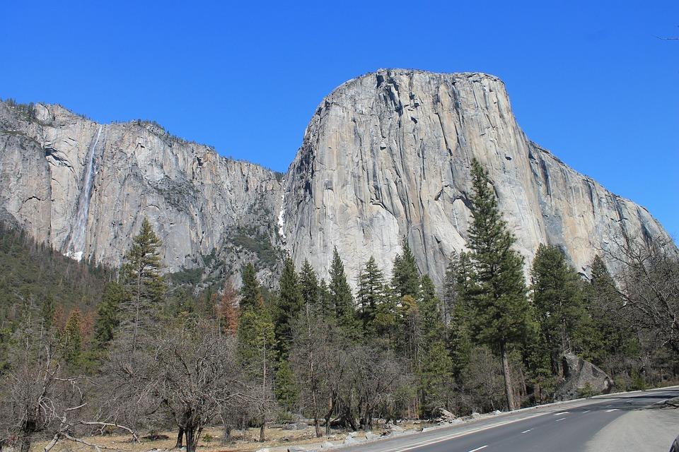El Capitan, Yosemite, Tree, Park, California, National