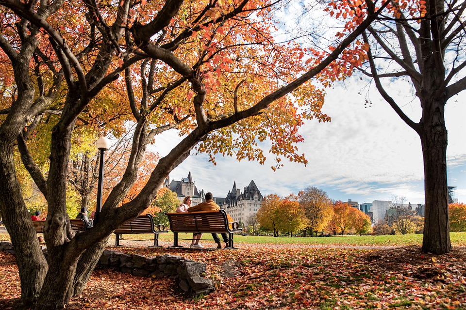 Fall, Park, Bench, Couple, Trees, Outdoor, Ottawa