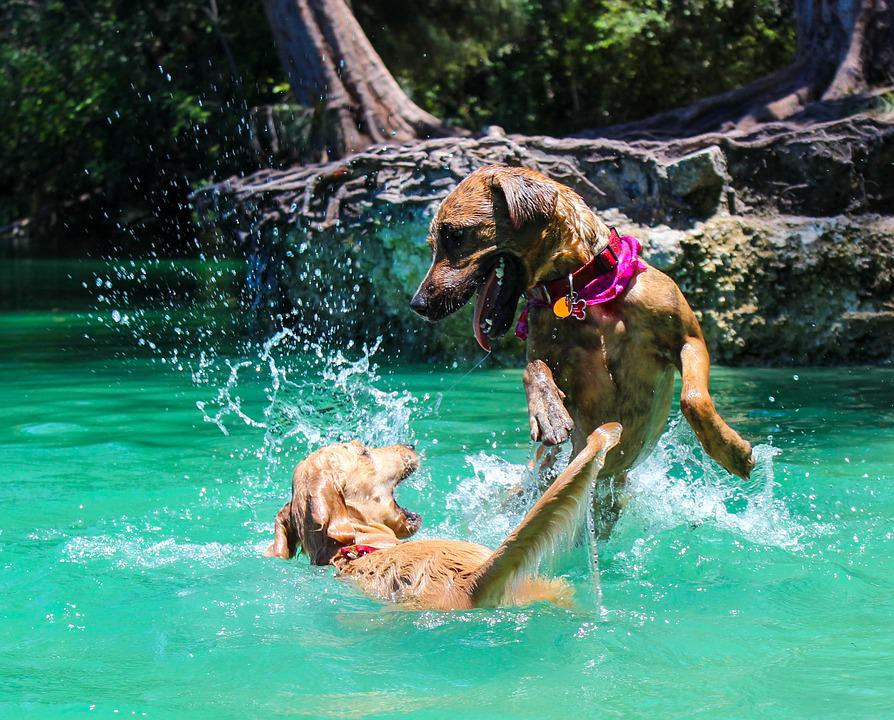 Dog, Dog Swimming, Lake, Park, Dog Park, Collar, Fetch