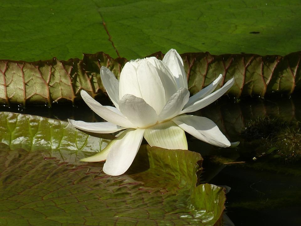 Singapore, Park, Botanical Garden, Flower, Blossom