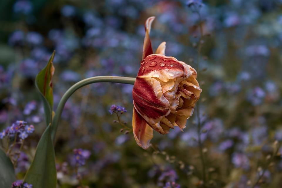 Flower, Nature, Plant, Outdoor, No Person, Park, Garden
