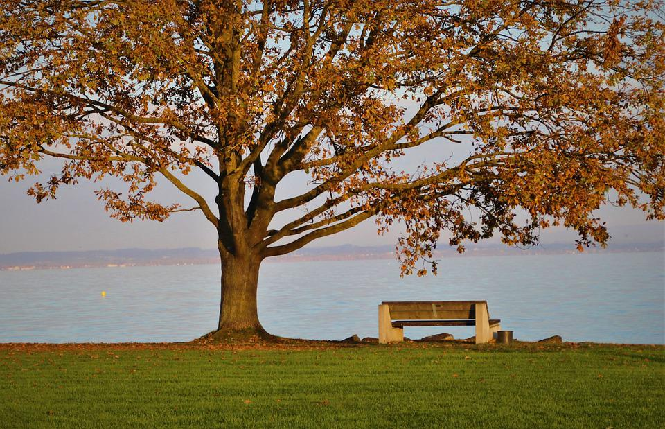 Bench, Lake, Park, Grass, Field, Branches, Autumn