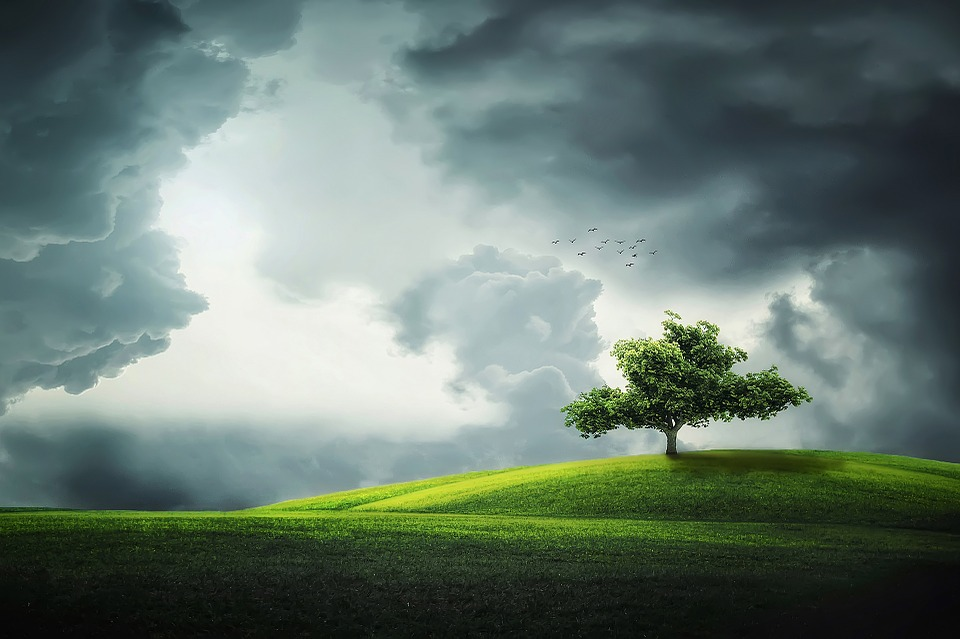 Tree, Summer, Beautiful, Park, Green, Grass, Clouds