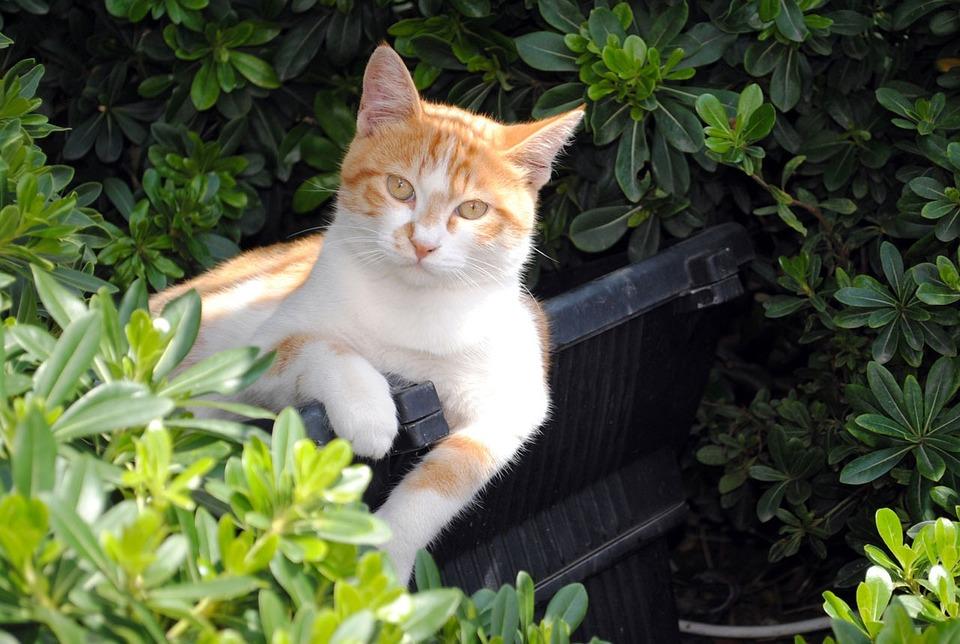 Cat, Yellow, Park, Flower, Relax, Garden, Green, Leaf