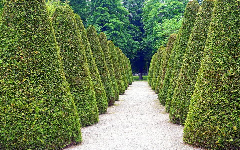 Park, Away, Shrubs, Bushes, Horticulture