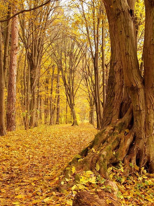 Nature, Landscape, Autumn, The Old Tree, Park, Foliage
