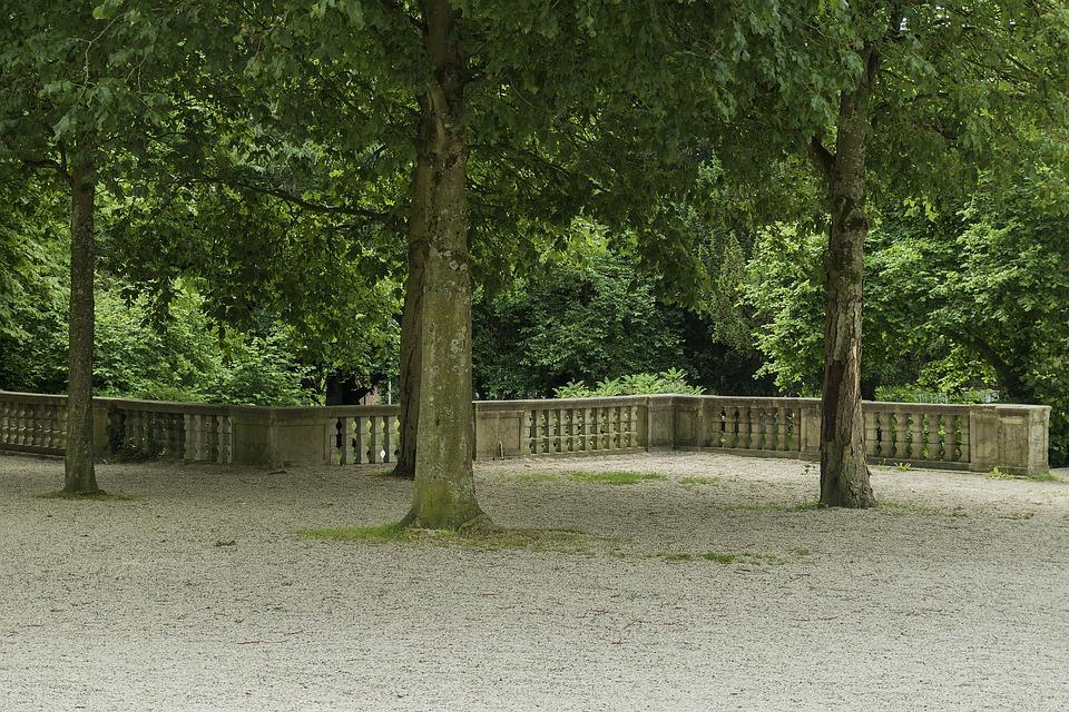 Landscape, Park, Tree