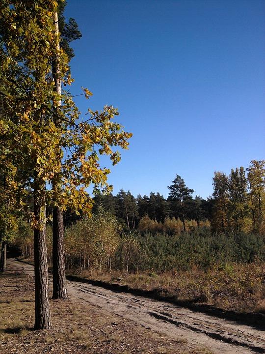Forest, Foliage, Leaf, Tree, Autumn, Nature, Park