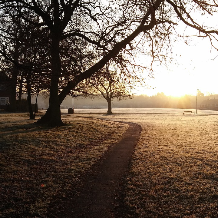 Frost, Morning, Fresh, Outdoor, Park