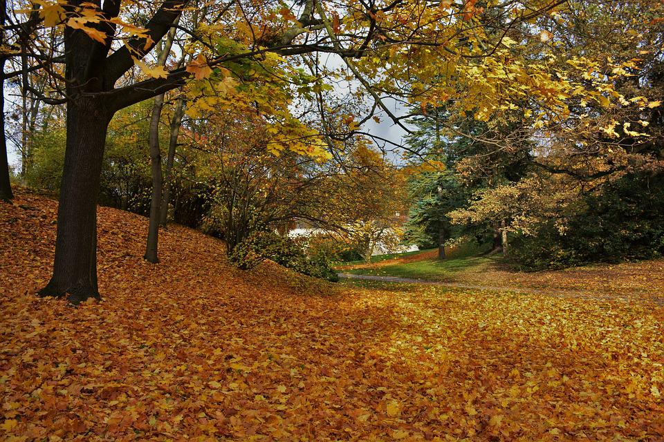 Autumn, Nature, Colors, Trees, Leaves, Park