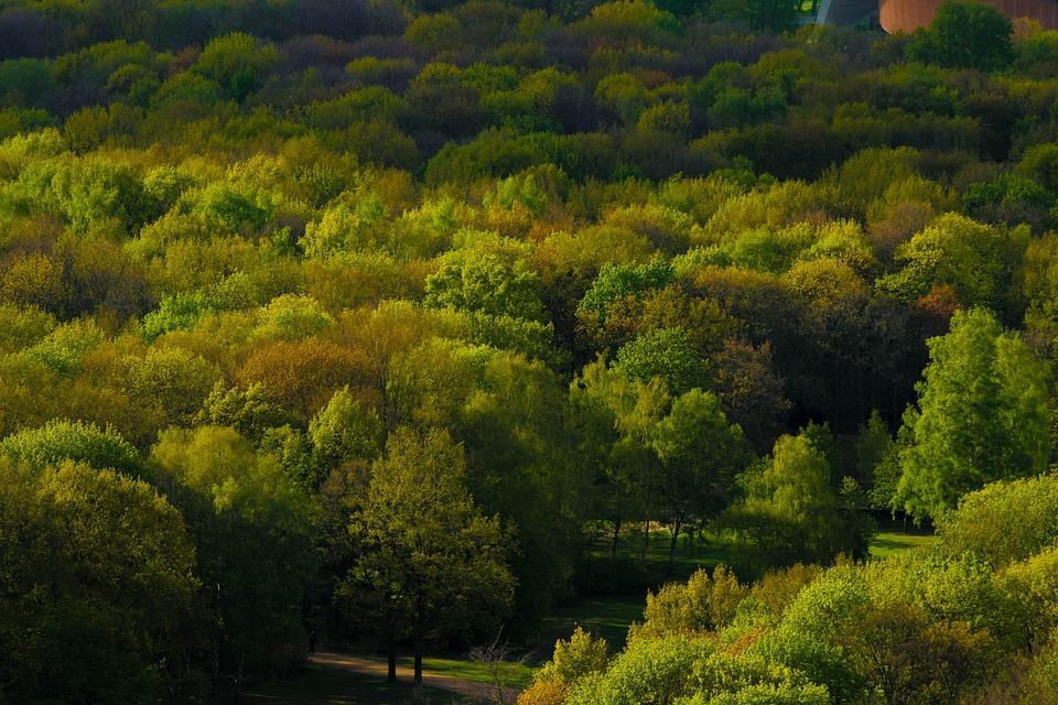 Trees, Forest, Berlin, Park, Nature, Landscape, Wood