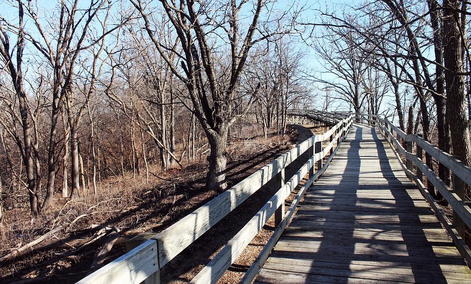 Nature, Forest, Bridge, Wooden, Adventure, Path, Park